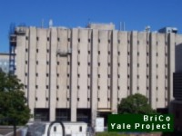 BriCo Yale University Project Asbestos Caulk Removal